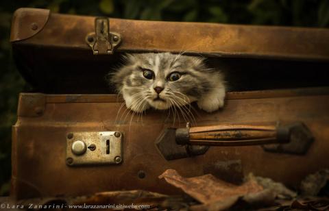 исключительно фотогеничные кошки