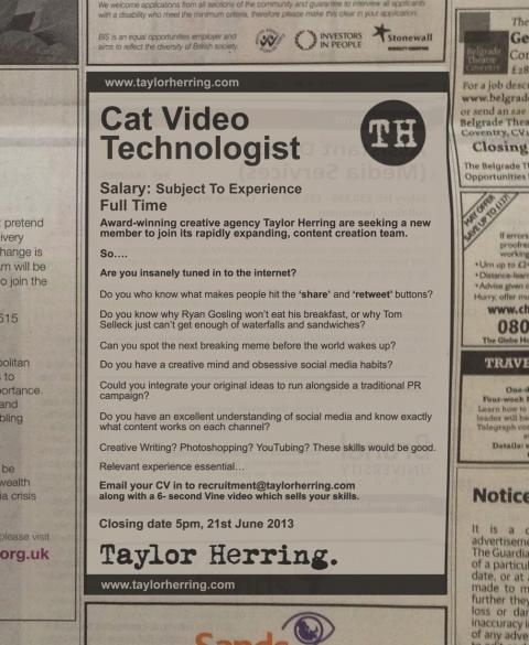 Британское PR-агентство ищет специалиста по котикам