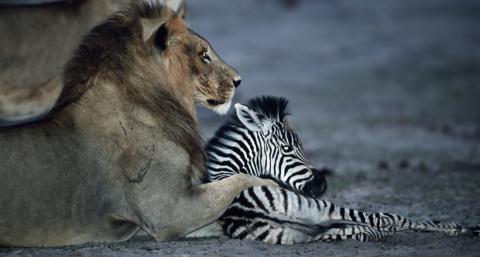Примеры удивительного поведения животных, в реальность которых трудно