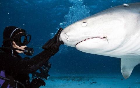 Что увидит жертва акулы в последние мгновенья жизни?