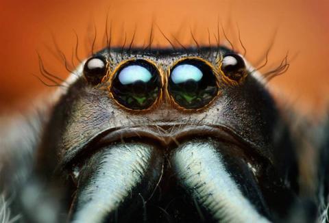 Вот я, вот я... превращаюсь в муравья!