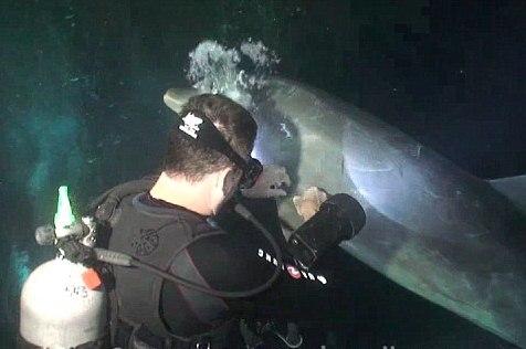 Дельфин попросил помощи у человека
