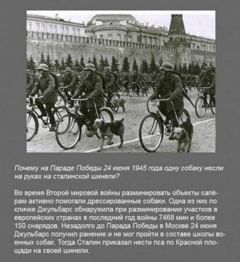 Почему на параде Победы 24 июня 1945 года одну собаку несли на руках на сталинской шинели?