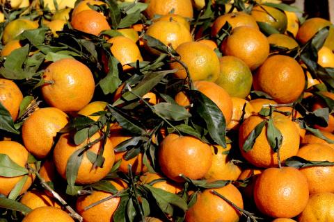 Вся правда о марокканских мандаринах.....