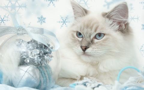 С Новым 2011 цветущим годом!!!