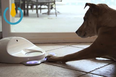 Умный питомец - игровая консоль для собак
