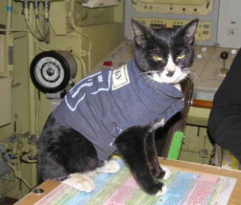 Атомный кот (  Акулы из стали)