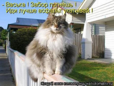 Невоскресная котоматрица