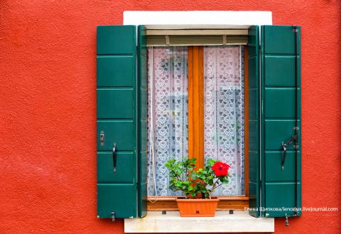 7 советов начинающему комнатному цветоводу