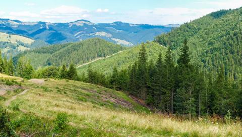 Из-за леса, из-за гор. ЕС наказывает Украину за непослушание
