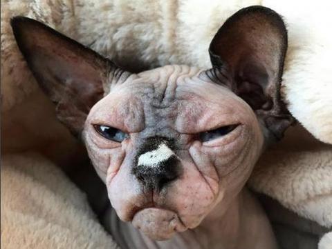 Самый страшный в мире кот-человеконенавистник обзавелся Instagram