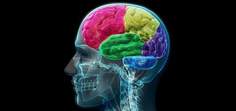 Проверь здоровье своего мозг…