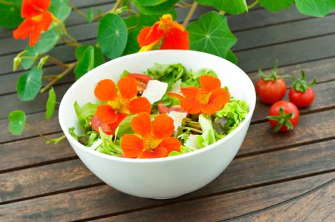Салат из букета. Путеводитель по съедобным цветам с рецептами