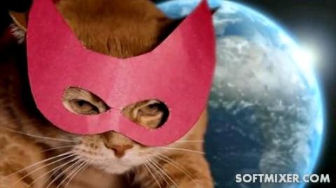 Десять историй о котах-героях