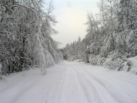 Магия зимнего леса