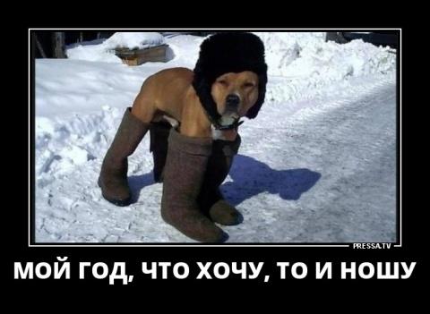 Новые смешные жизненные Демотиваторы (45 фото) 15-01-2018 50418