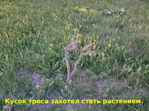 Трос и ростения