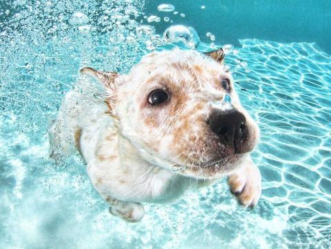 Подводные щенки в проекте фо…