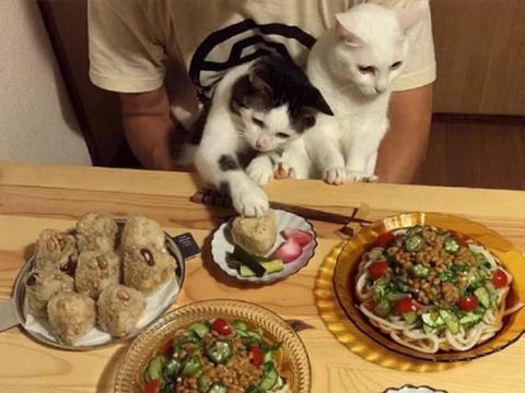 Когда кот настоящий друг