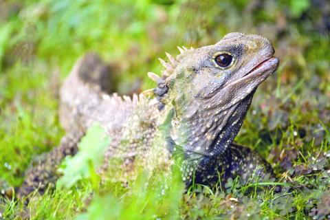 Самая древняя рептилия, сохранившаяся со времен динозавров