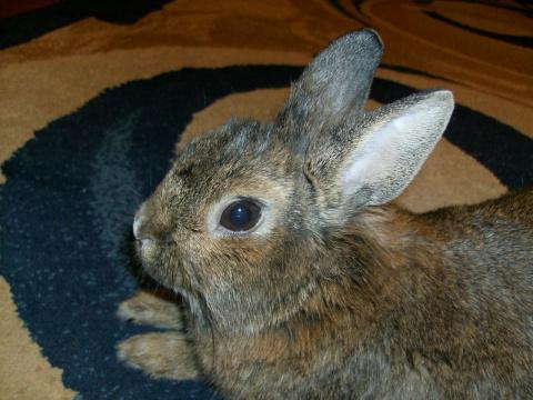 Кролики-это не только ценный мех, но и масса положительных эмоций!