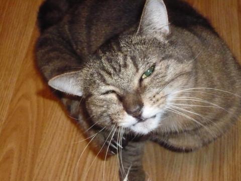 Сегодня умер мой любимый кот Вася