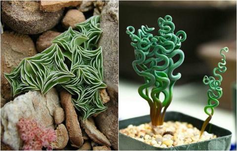 Комнатные растения, которые …