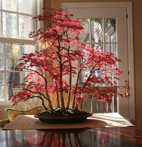 15 восхитительных карликовых деревьев