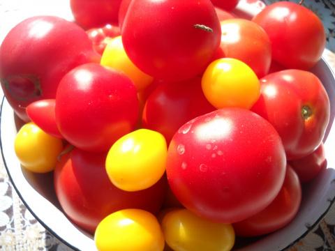Про любимые помидоры!)