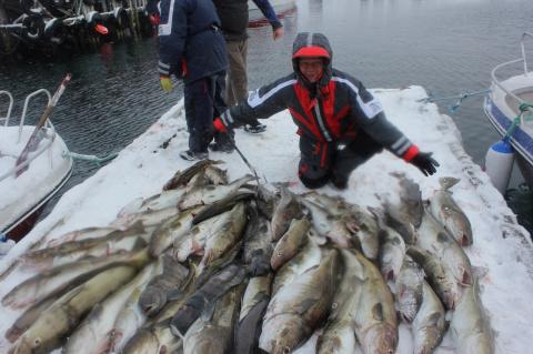 1550. Групповой рыболовный выезд на Север Норвегии. о. Сероя. База БигФишАдвентуре с 1 по 8 мая 2014 года