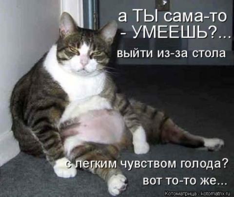 Новый сборник котоматриц