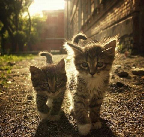 Мега позитивные котейки