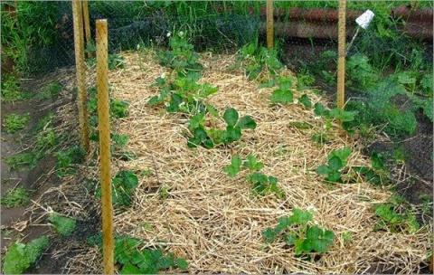 Как вырастить экологически ч…