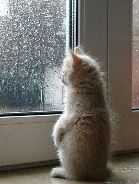 Кот летит из окна