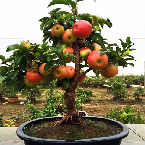 6 зверских способов заставить деревья отдать больше урожая