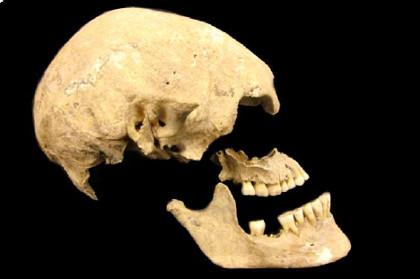 Череп одного из предков европейцев, чей геном прочитали ученые  Иллюстрация: <a href=