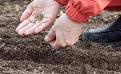 Северная агротехника: полезные советы для огородников
