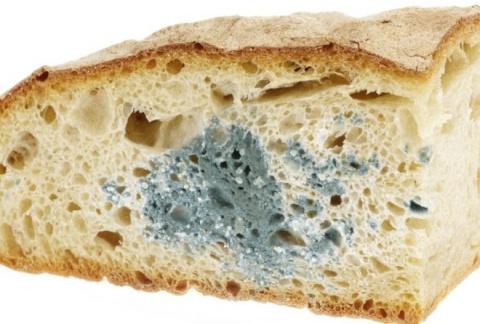 Хлеб с плесенью: выбросить и…