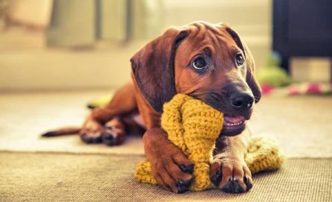 Конкурс собачьей фотографии …