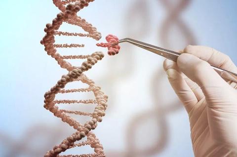 К чему может привести редактирование генома