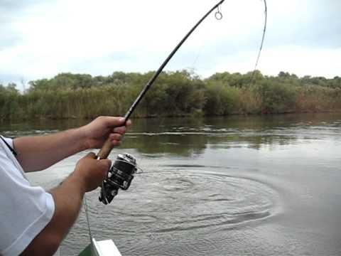 Трое рыбаков Тащат одну Здоровенную рыбу по очереди.