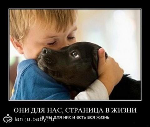 ТЕРЕМОК. Лучшая порода собаки для детей
