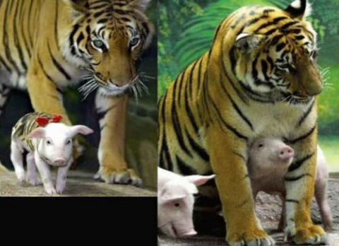 Дружные животные, которые по…