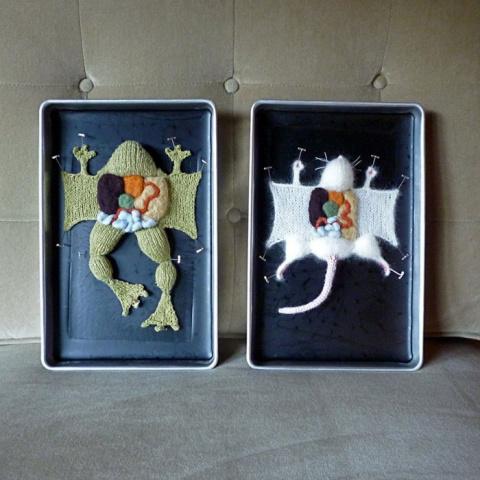 Вязаная анатомия животных