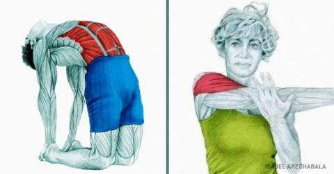 20 изображений, которые покажут, какие мышцы вы растягиваете.