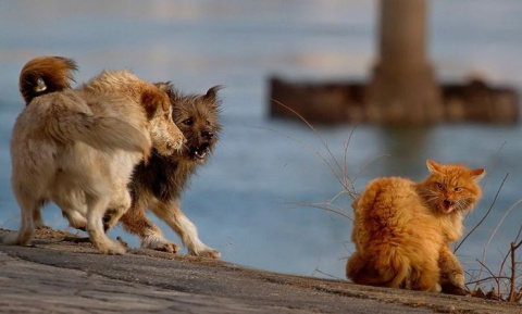 Кот против собаки (6 фото)