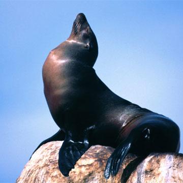 Животные от А до Я. Морские …