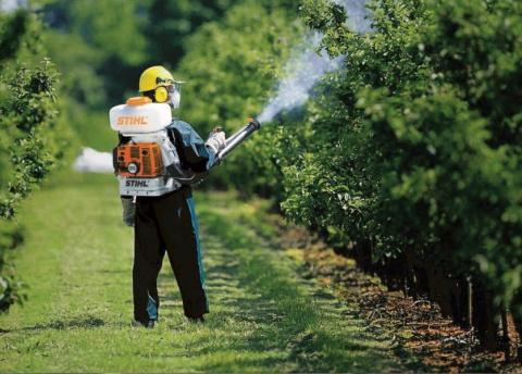 Все методы борьбы с садовыми клещами! Абрикосоалыча или черный абрикос