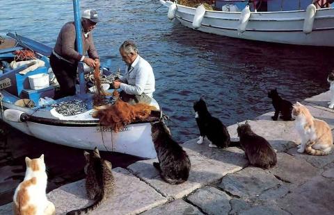Рыбалка.В большой семье Еб... не Щелкают)))