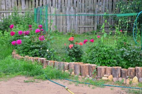 Прошу и в наш сад заглянуть - экскурсия по участку